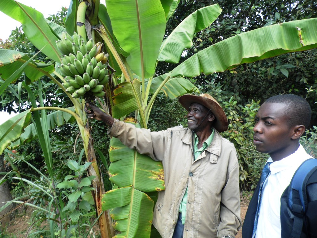 Banana Muia Kusenga By Laban Robert.JPG