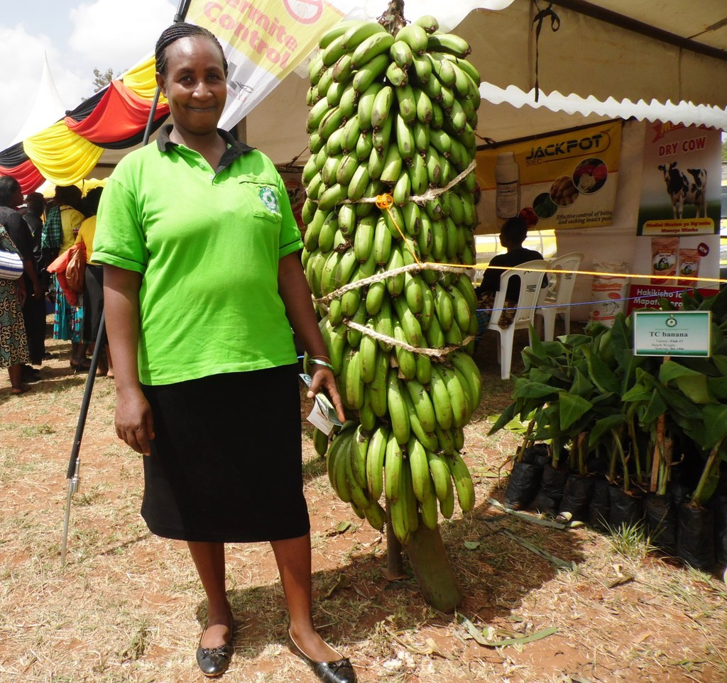 Banana giant Naomi Wahu by Laban Robert.JPG