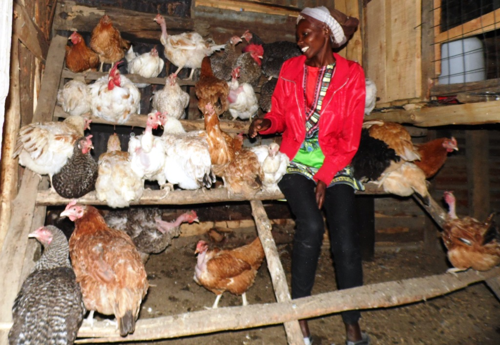 Introduce new feeds gradually to avoid stressing chicken