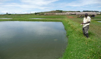 Farmers Build Fish Ponds With Mud Cutting Construction Costs