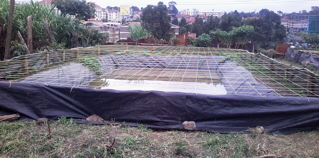 Fish pond at Langata Prisons farm, Nairobi. By Laban Robert.jpg