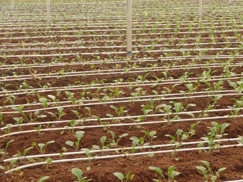 Greenhouse-Drip-Irrigation-System