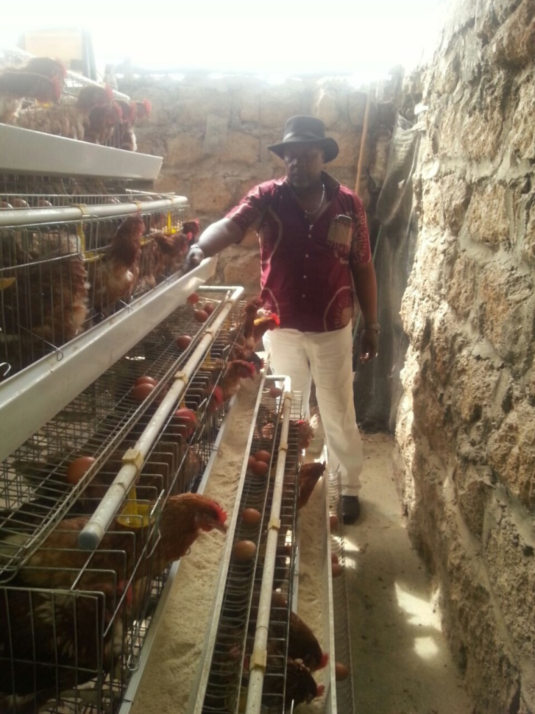 Keeping high number of chicken cuts farmer's production cost
