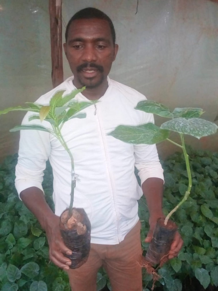 Ndungu holding seedlings