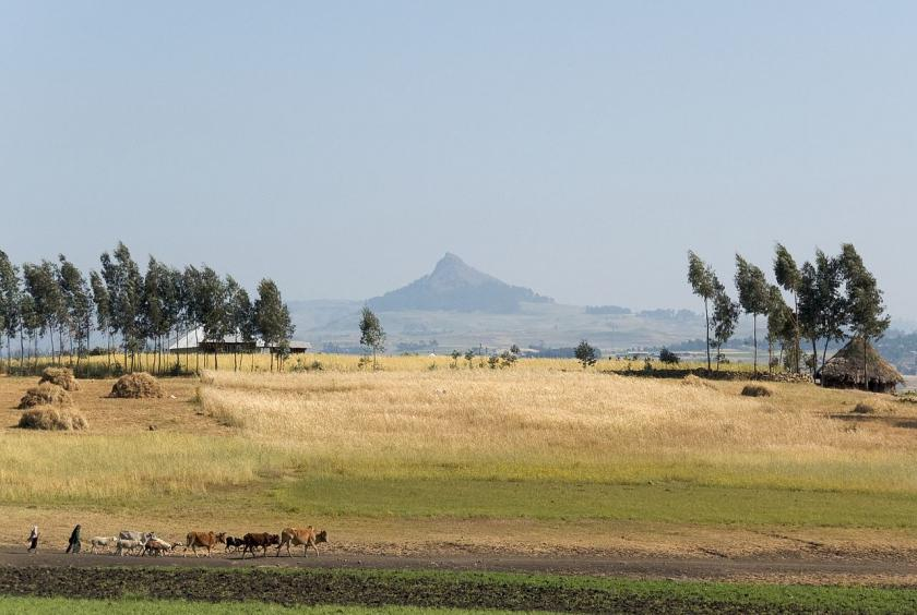 Nordic Green 5 by A. Davey On The Road To Simien Mountains National Park Ethiopia 1