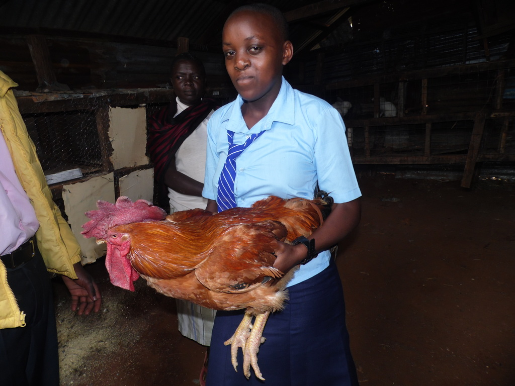 Whatsapp helps poultry farmer make more sales on festive season