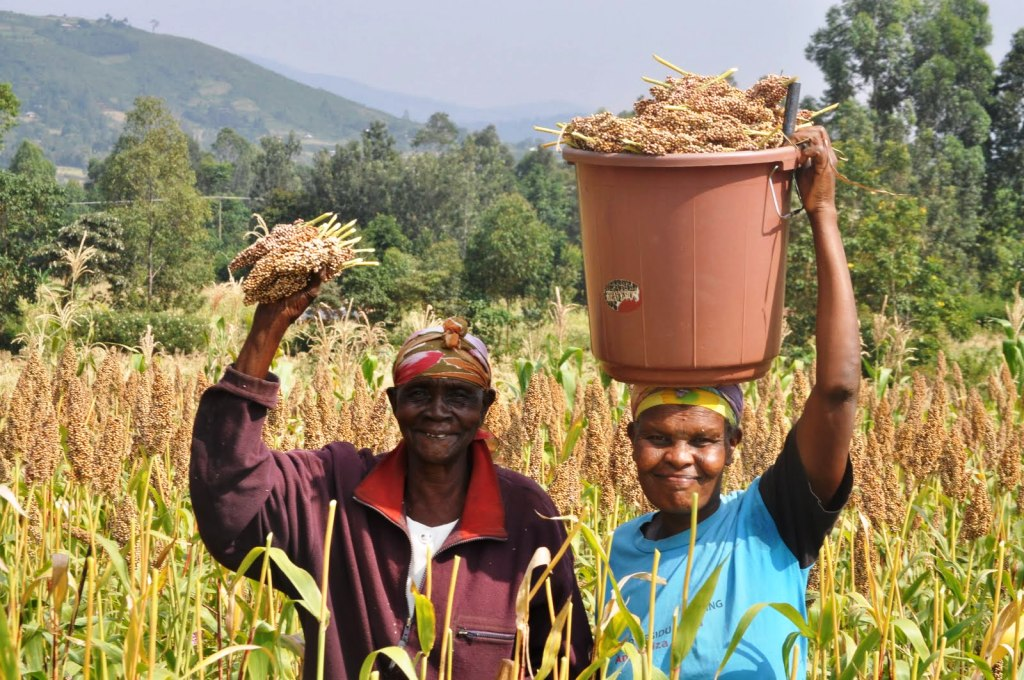 Sorghum photo by One Acre Fund.JPG