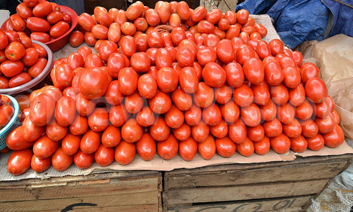 Tomatoes photo by New Vision.jpg