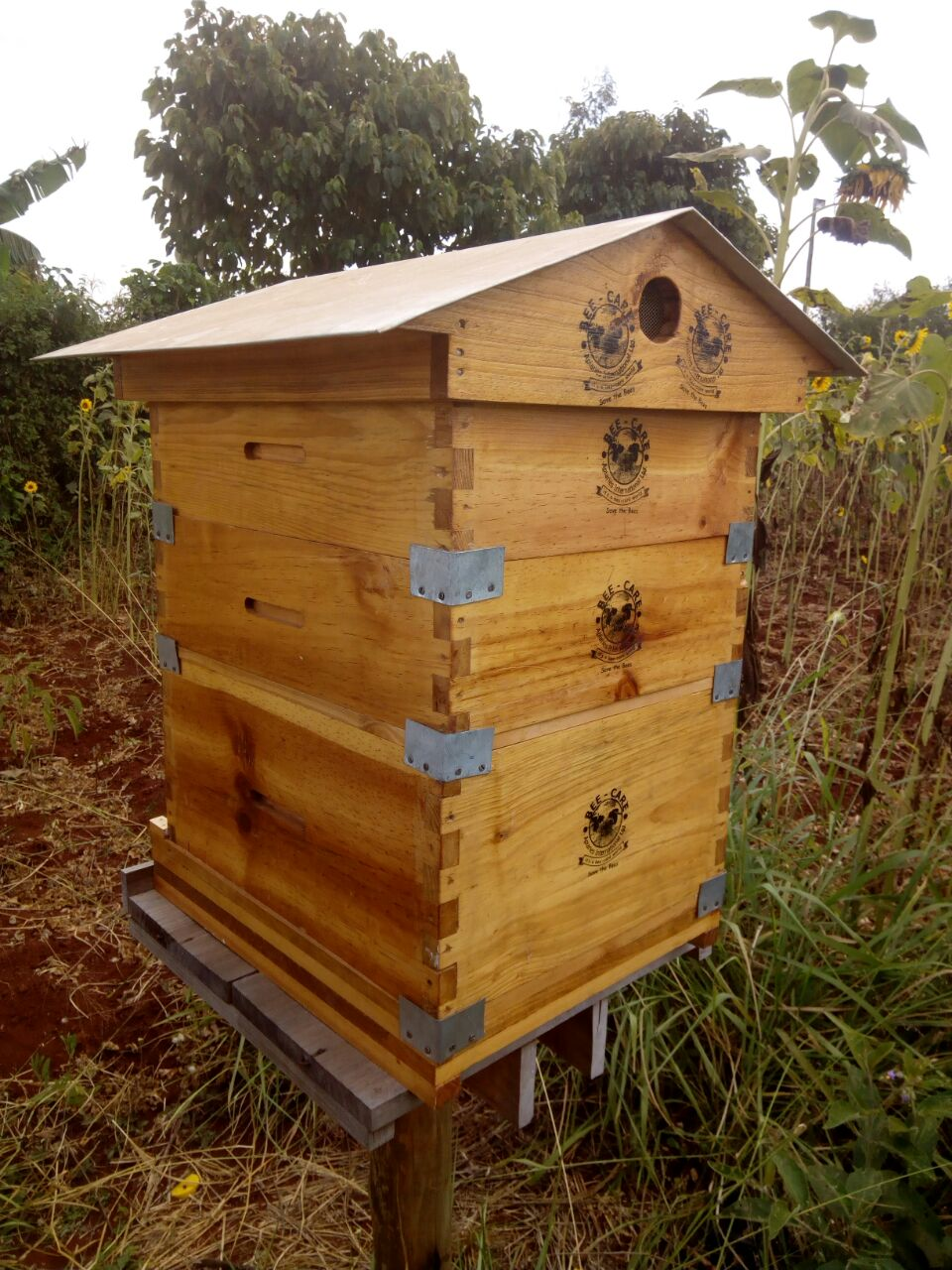 Backyard beehives can offer farmers 13 per cent increase ...