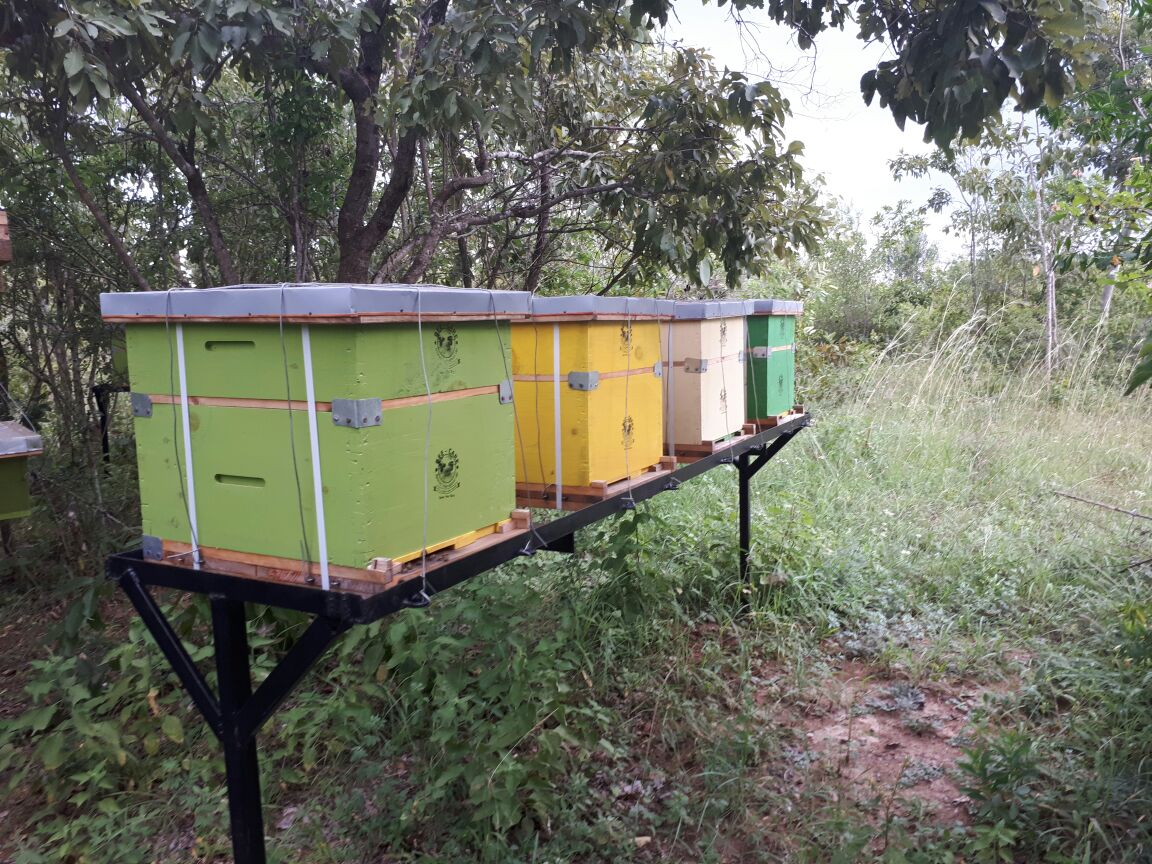 backyard beehive in the farm