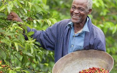 Coffee prices up by 18 per cent at the Nairobi auction