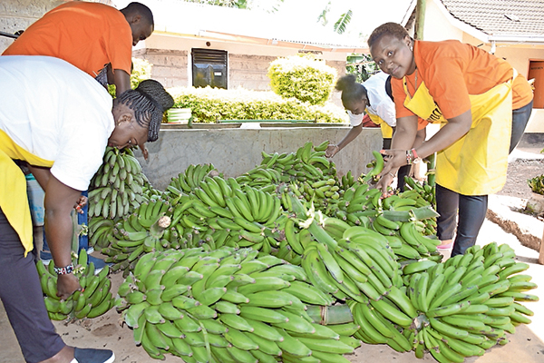 Green banana and broccoli market opens up for Kenyan farmers in