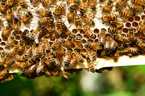 honey bees bees hive bee hive 53444