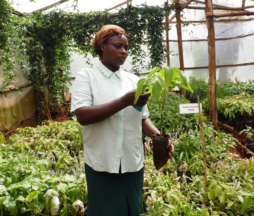 keziah 2 wonder crops fruit seedlings