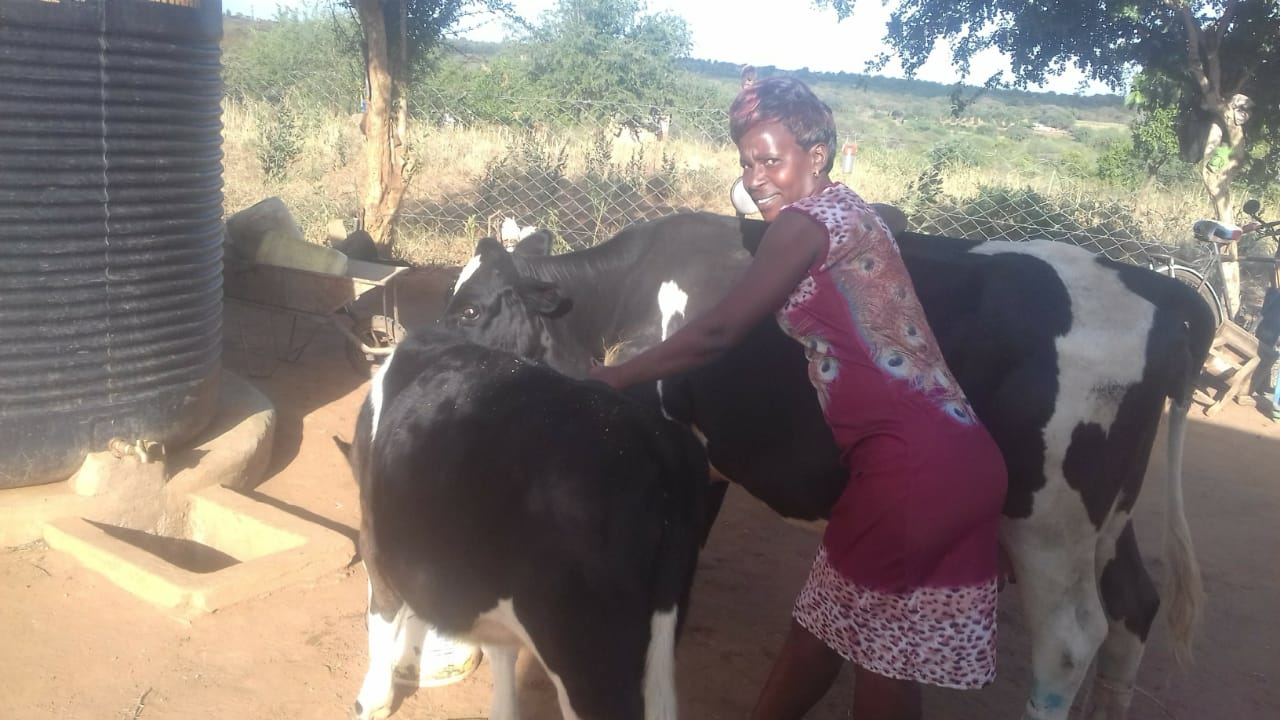 mary mathuli cow