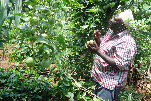 Purple passion fruit market pops up in Kiambu County
