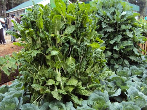 With a multi,storey vegetable garden you can harvest 30kg of