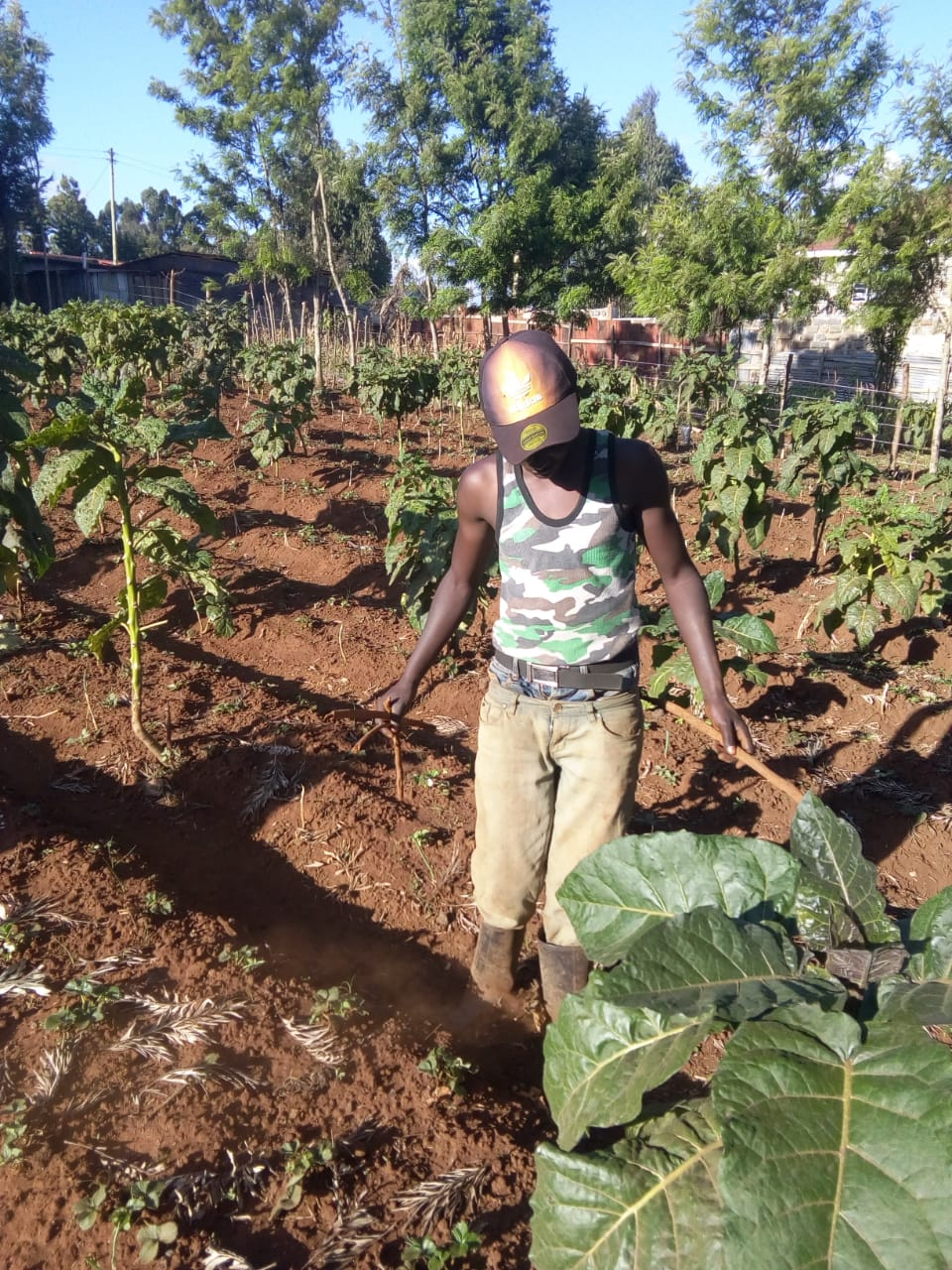 Quest for healthy diet births a fruit and vegetable agribusiness for