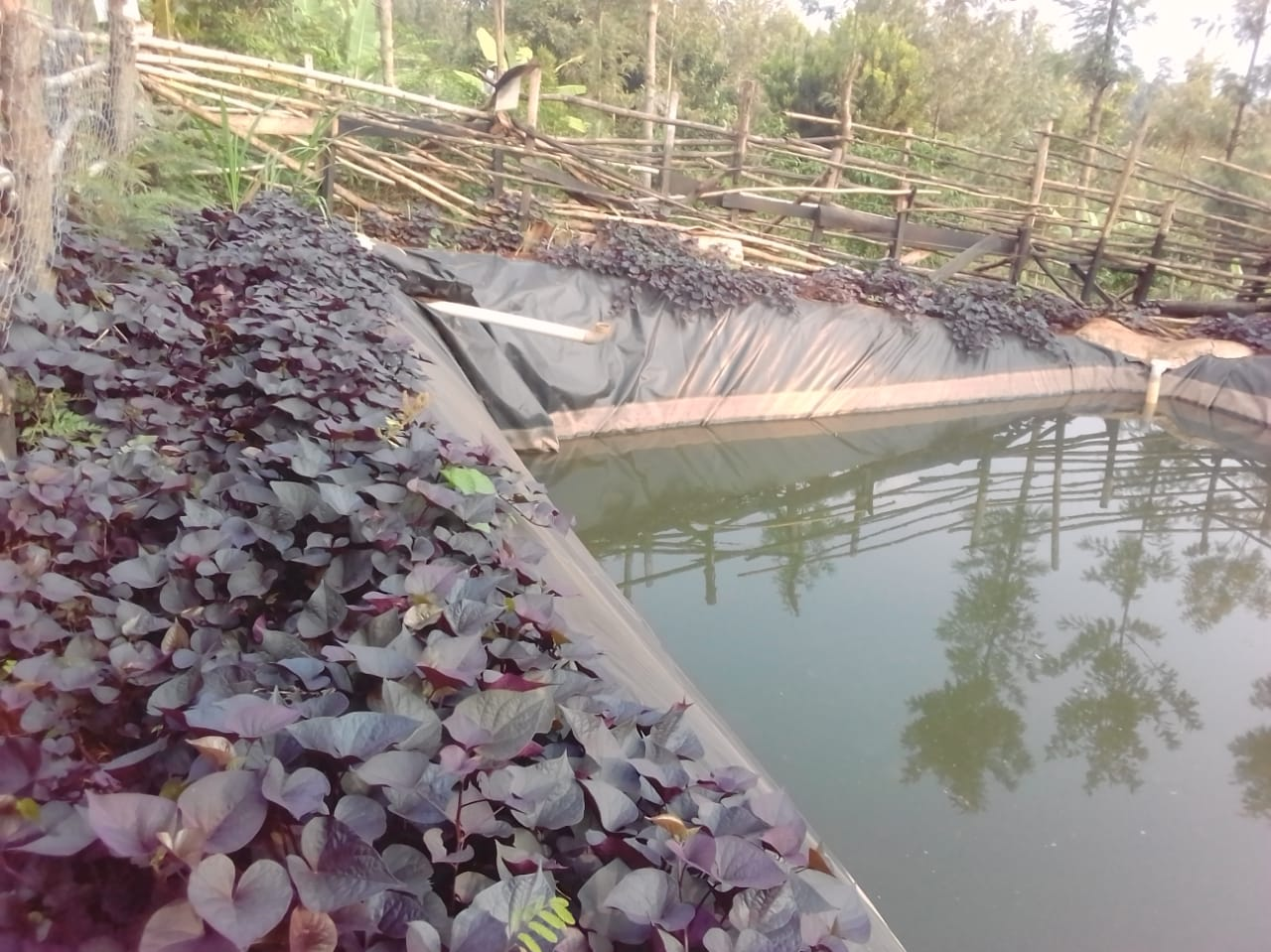 Water harvesting sets Nyeri vegetable farmer on the path to